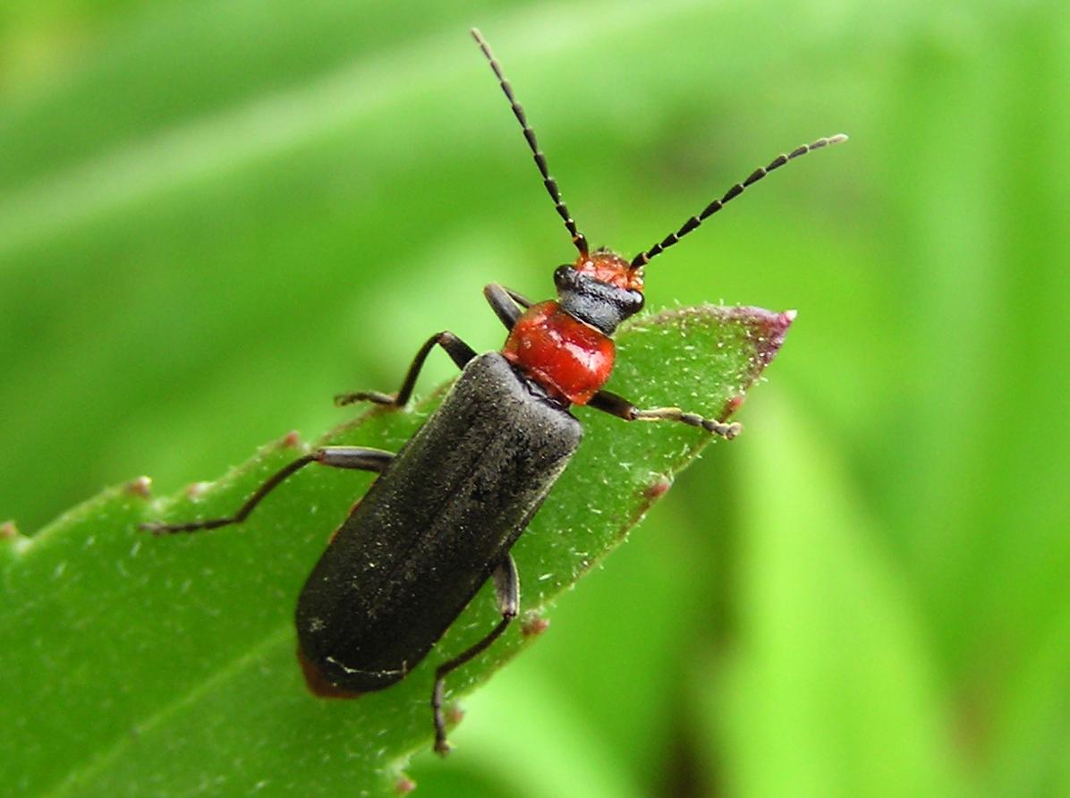 картинки жук 5