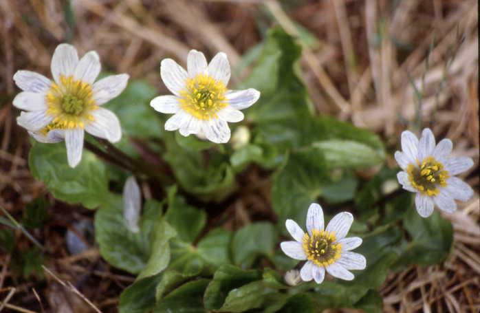 White flowers mightylinksfo